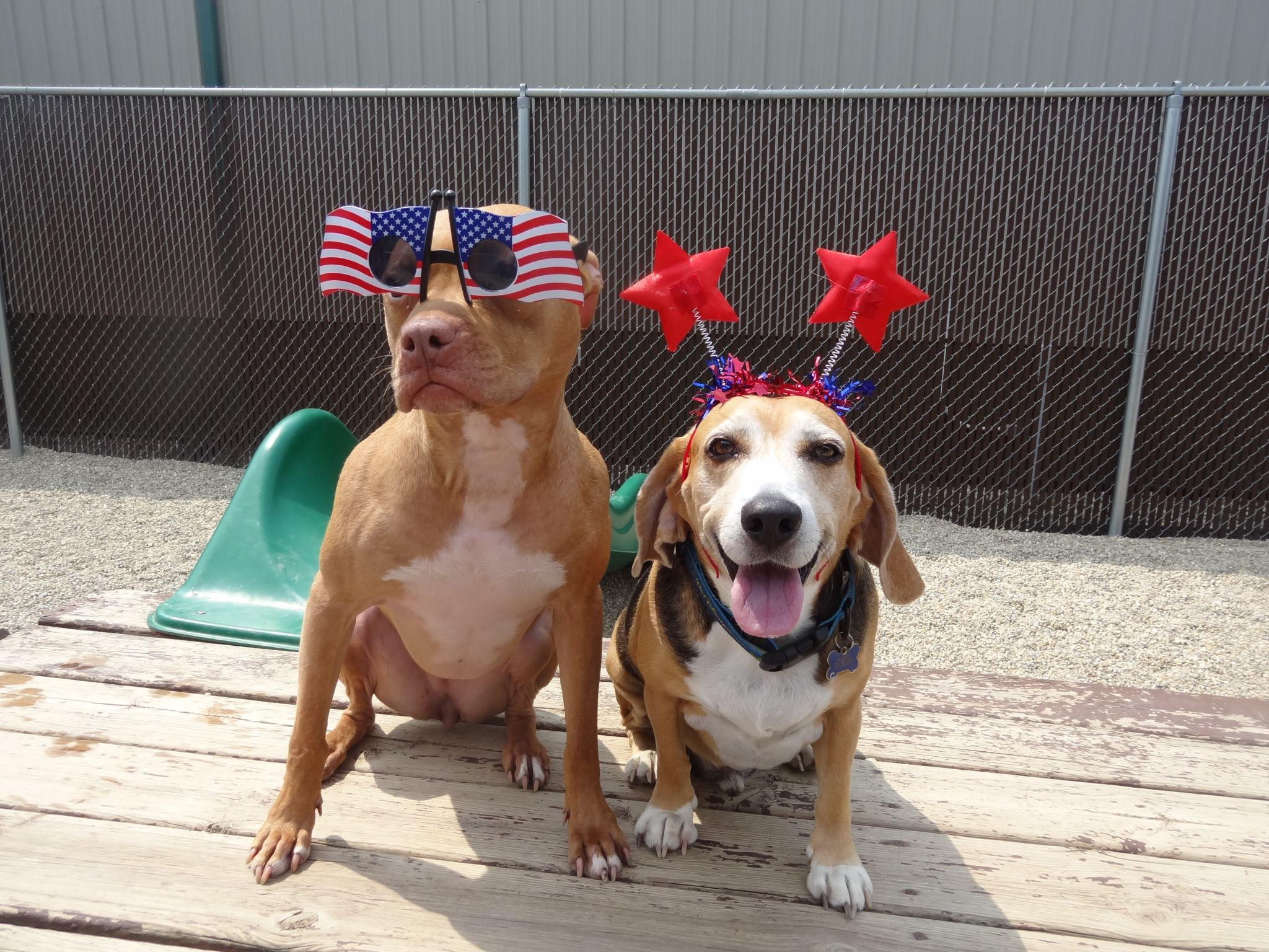 Forth of July dogs