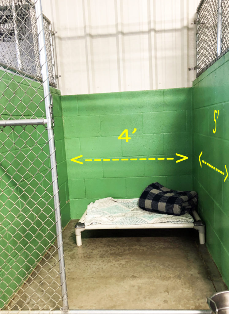 Dog boarding at Paradise Pet in Bloomington Illinois